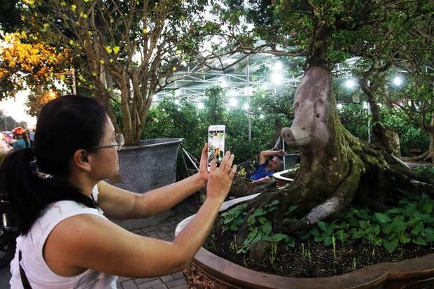 Cận cảnh cây khế đầu heo có giá nửa tỷ đồng được bày bán thu hút người dân Sài Gòn - Ảnh 17.