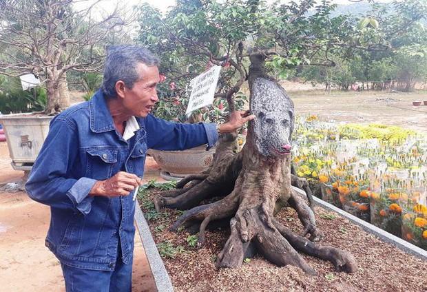 Cận cảnh cây khế đầu heo có giá nửa tỷ đồng được bày bán thu hút người dân Sài Gòn - Ảnh 3.