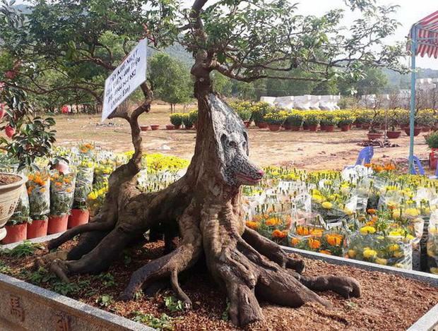 Cận cảnh cây khế đầu heo có giá nửa tỷ đồng được bày bán thu hút người dân Sài Gòn - Ảnh 4.