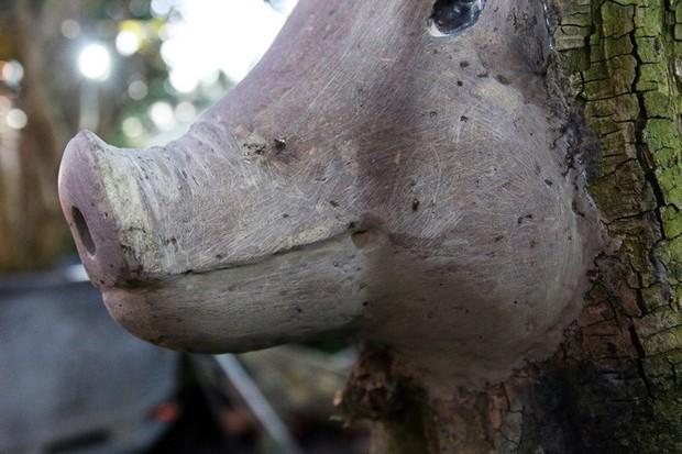 Cận cảnh cây khế đầu heo có giá nửa tỷ đồng được bày bán thu hút người dân Sài Gòn - Ảnh 8.