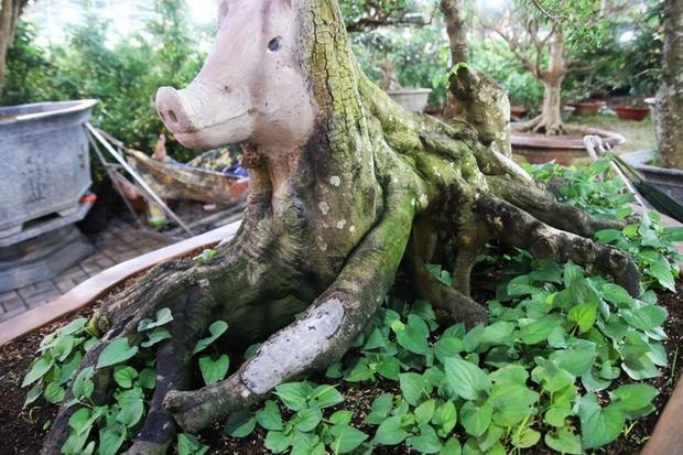 Cận cảnh cây khế đầu heo có giá nửa tỷ đồng được bày bán thu hút người dân Sài Gòn - Ảnh 10.
