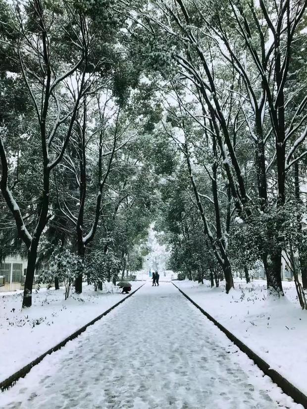 Tuyết rơi trắng trời tạo nên khung cảnh đẹp nao lòng tại các trường đại học - Ảnh 4.