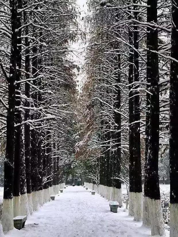 Tuyết rơi trắng trời tạo nên khung cảnh đẹp nao lòng tại các trường đại học - Ảnh 6.