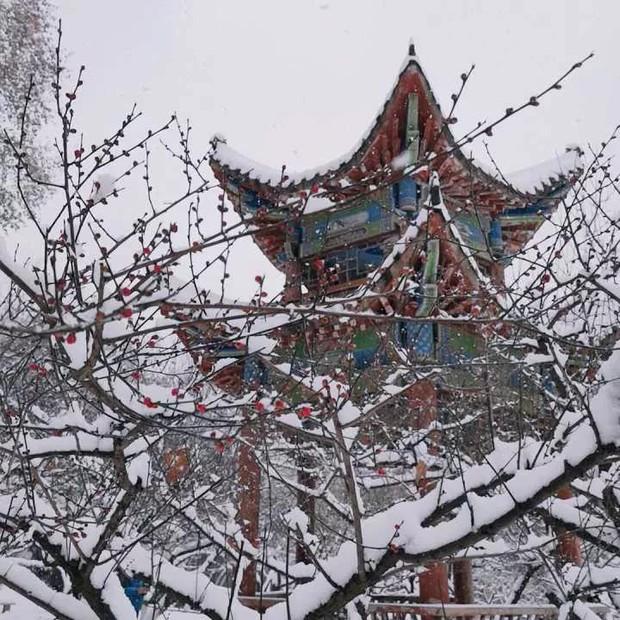 Tuyết rơi trắng trời tạo nên khung cảnh đẹp nao lòng tại các trường đại học - Ảnh 8.