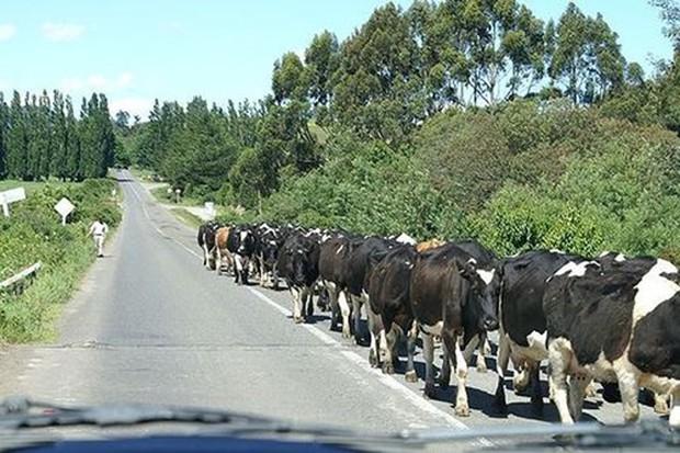 Các quy định tham gia giao thông kỳ lạ trên thế giới - Ảnh 6.