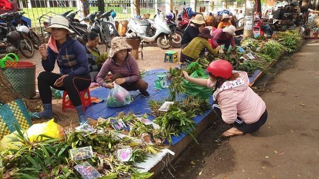 Chợ lan rừng nhộn nhịp đón Tết, người dân đổ xô tận diệt loài hoa quý - Ảnh 2.
