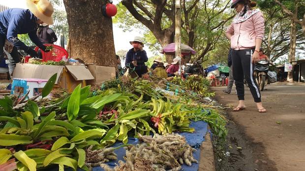 Chợ lan rừng nhộn nhịp đón Tết, người dân đổ xô tận diệt loài hoa quý - Ảnh 3.