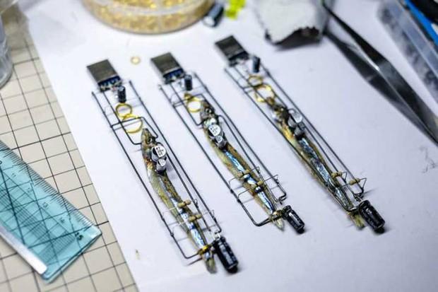 Nhật Bản thứ gì cũng dị: Tưởng USB làm từ não cá thật, hóa ra là đồ giả mạo làm cảnh - Ảnh 2.