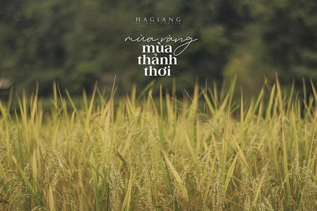 Review chuyến đi Hà Giang săn mùa vàng, chàng photographer khiến dân tình mê như điếu đổ với bộ ảnh đẹp mê hồn - Ảnh 15.