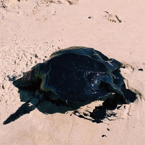 Rùa biển quý hiếm chết dạt bờ trong tình trạng toàn thân bọc kín dầu đen, đến giờ khoa học vẫn đau đầu không hiểu chuyện gì đang xảy ra - Ảnh 4.