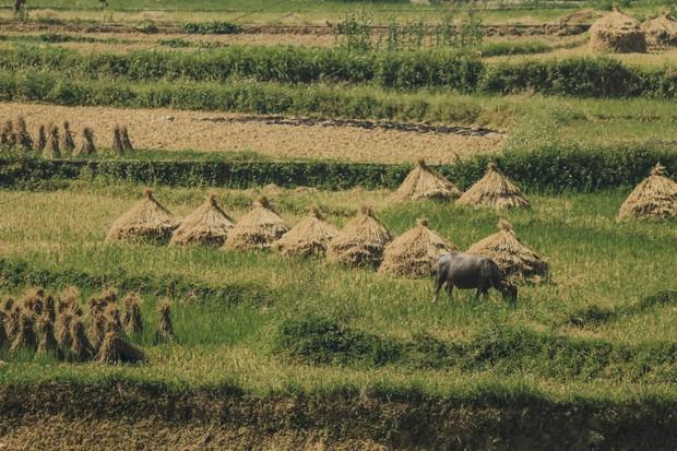 Review chuyến đi Hà Giang săn mùa vàng, chàng photographer khiến dân tình mê như điếu đổ với bộ ảnh đẹp mê hồn - Ảnh 6.