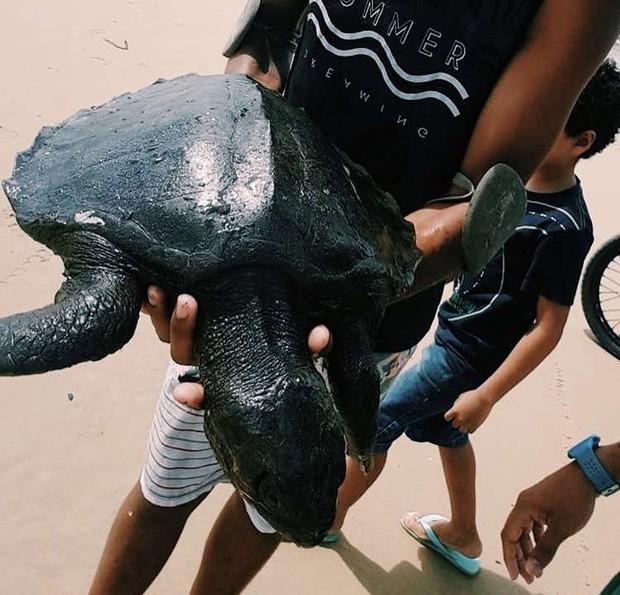 Rùa biển quý hiếm chết dạt bờ trong tình trạng toàn thân bọc kín dầu đen, đến giờ khoa học vẫn đau đầu không hiểu chuyện gì đang xảy ra - Ảnh 3.