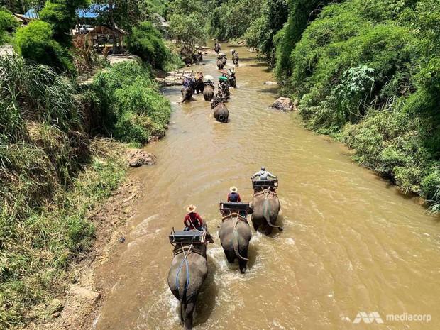 Voi biểu diễn ở Thái Lan - nỗi đau đằng sau trò tiêu khiển - Ảnh 4.
