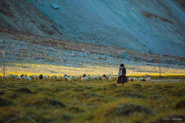 """Đã mắt với bộ ảnh du lịch Ladakh - """"Tiểu Tây Tạng"""" của Ấn Độ, nơi không dành cho những kẻ yếu tim và sợ độ cao - Ảnh 10."""