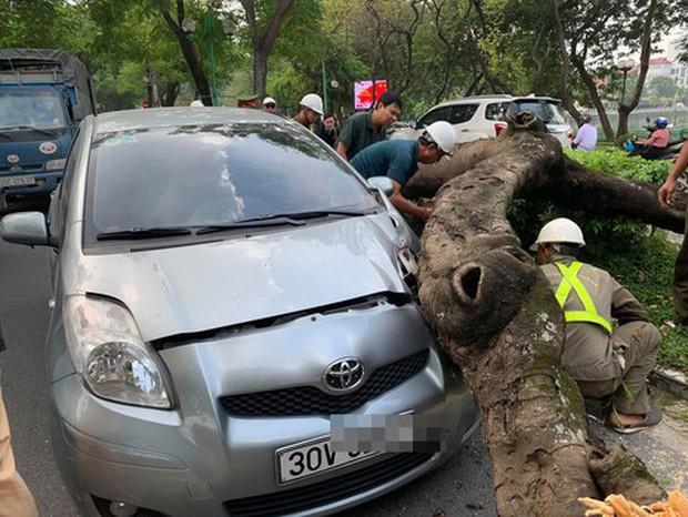 Hà Nội: Cây xanh bất ngờ bật gốc, đè vào ô tô đang đi trên đường Thanh Niên - Ảnh 1.