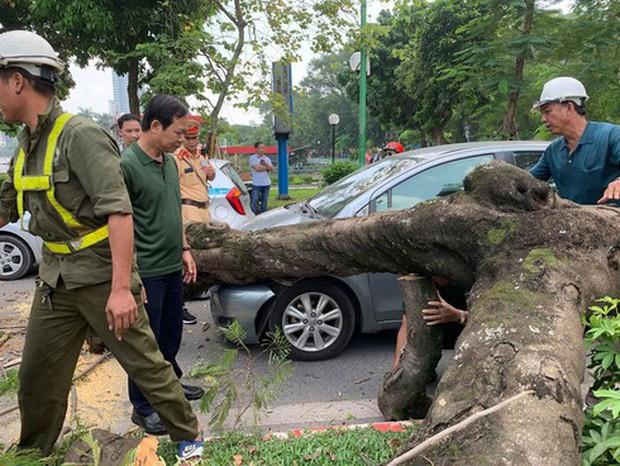 Hà Nội: Cây xanh bất ngờ bật gốc, đè vào ô tô đang đi trên đường Thanh Niên - Ảnh 2.