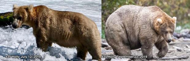Gấu mẹ vĩ đại là có thật: Vừa tìm ra con gấu béo nhất mùa đông năm nay, nuôi con giỏi đến mức con người cũng phải bái phục - Ảnh 2.