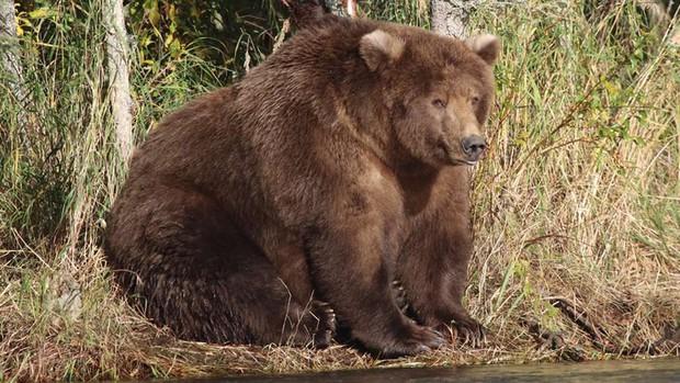 Gấu mẹ vĩ đại là có thật: Vừa tìm ra con gấu béo nhất mùa đông năm nay, nuôi con giỏi đến mức con người cũng phải bái phục - Ảnh 5.