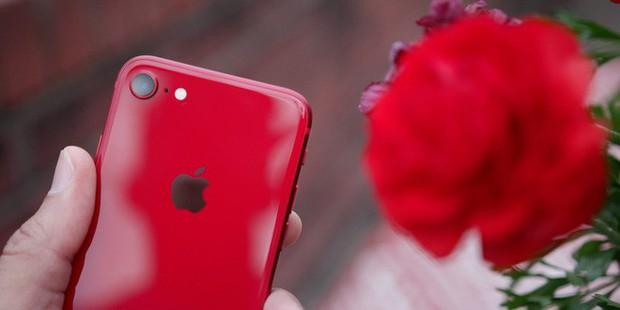 Nỏng hổi tin đồn về iPhone SE 2: Giá 9 triệu, mạnh như iPhone 11, ra mắt đầu năm 2020 - Ảnh 1.