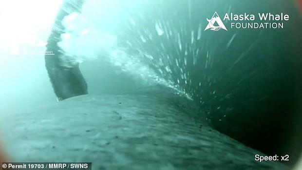 Video cực hiếm ghi lại quá trình cá voi đan lưới săn mồi: Cảnh tượng được xem là kỳ vĩ nhất của đại dương - Ảnh 3.