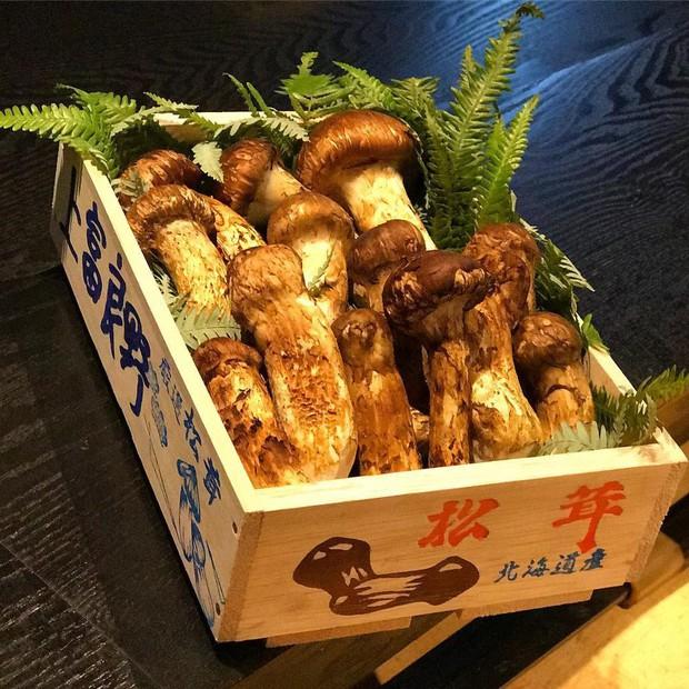 Có giá lên đến 40 triệu đồng/kg nhưng vua của các loại nấm vẫn được người Nhật ưa chuộng và dưới đây là lý do tại sao - Ảnh 5.