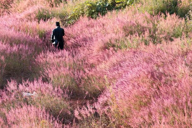 """Choáng toàn tập với khung cảnh """"1 mét vuông 12 cô dâu"""" ở Đà Lạt mùa cỏ hồng, bình minh 30 phút mà có 50 đôi chụp ảnh cưới - Ảnh 3."""