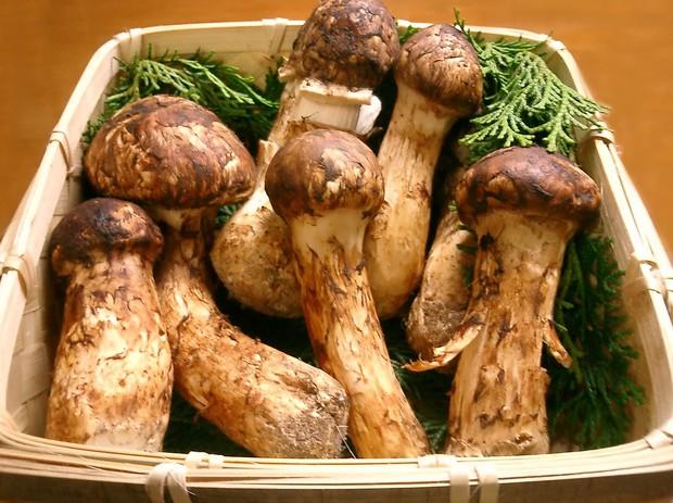 Có giá lên đến 40 triệu đồng/kg nhưng vua của các loại nấm vẫn được người Nhật ưa chuộng và dưới đây là lý do tại sao - Ảnh 2.