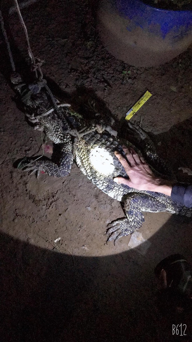Cá sấu từ dưới sông Đồng Nai mò vào nhà dân - Ảnh 1.