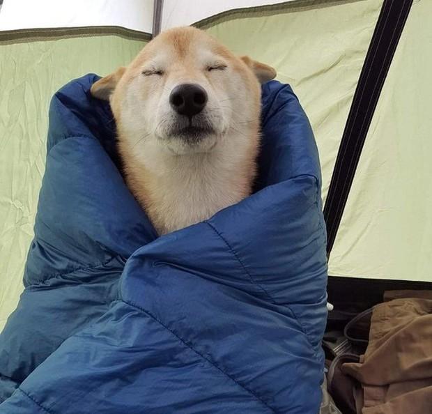 Khoảnh khắc chill phết của các loài động vật khiến bạn cảm thấy thật nhẹ nhõm sau một ngày làm việc căng thẳng - Ảnh 7.