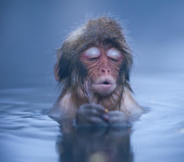 Khoảnh khắc chill phết của các loài động vật khiến bạn cảm thấy thật nhẹ nhõm sau một ngày làm việc căng thẳng - Ảnh 5.