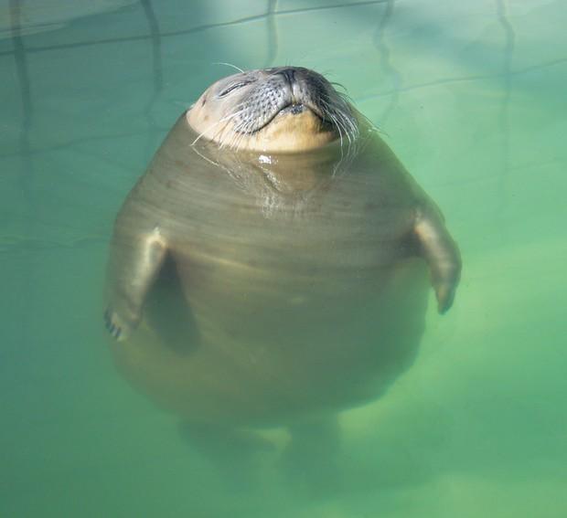 Khoảnh khắc chill phết của các loài động vật khiến bạn cảm thấy thật nhẹ nhõm sau một ngày làm việc căng thẳng - Ảnh 9.