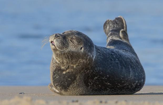Khoảnh khắc chill phết của các loài động vật khiến bạn cảm thấy thật nhẹ nhõm sau một ngày làm việc căng thẳng - Ảnh 13.