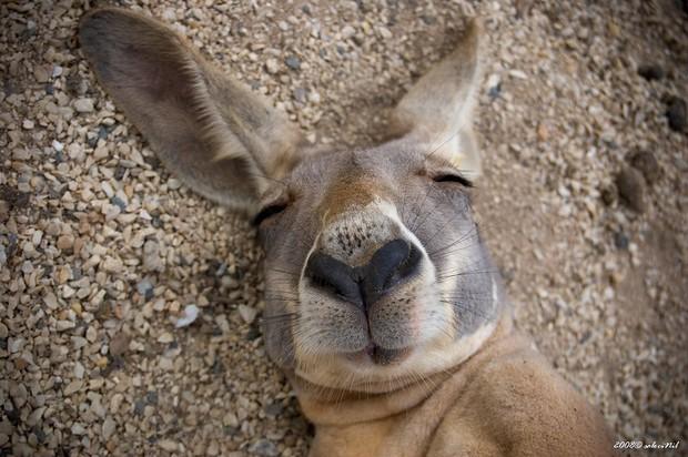 Khoảnh khắc chill phết của các loài động vật khiến bạn cảm thấy thật nhẹ nhõm sau một ngày làm việc căng thẳng - Ảnh 10.