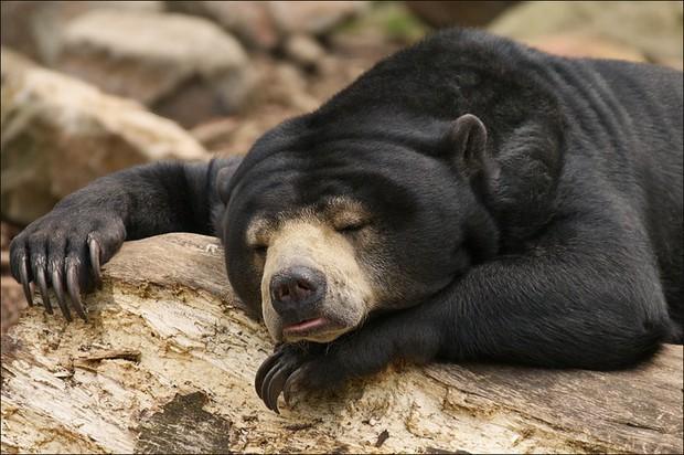 Khoảnh khắc chill phết của các loài động vật khiến bạn cảm thấy thật nhẹ nhõm sau một ngày làm việc căng thẳng - Ảnh 15.