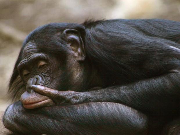 Khoảnh khắc chill phết của các loài động vật khiến bạn cảm thấy thật nhẹ nhõm sau một ngày làm việc căng thẳng - Ảnh 1.