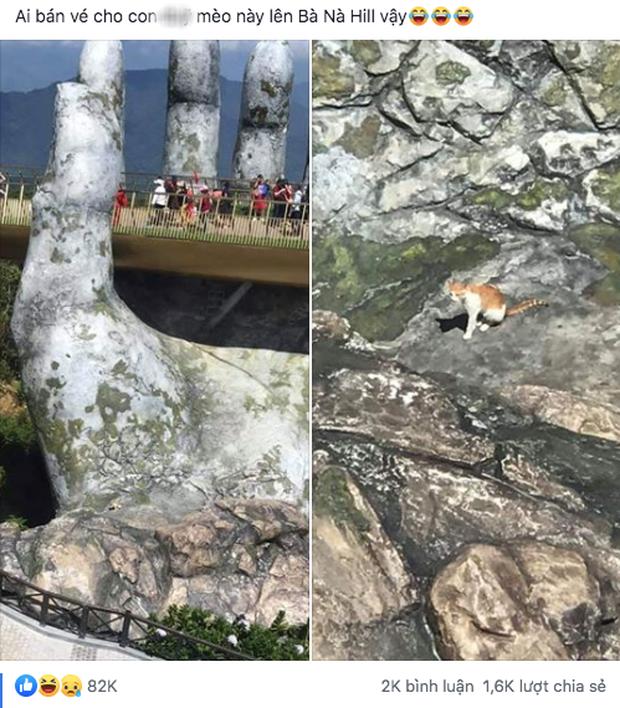 """Dân mạng chết cười với hình ảnh chú mèo xuất hiện ở Cầu Vàng: Trẫm là """"hoàng thượng"""", cần gì phải mua vé! - Ảnh 2."""