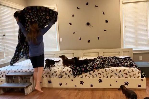 Cặp vợ chồng Mỹ chi hơn 20 triệu đồng cho chiếc giường dài gần 4 mét để có thể ngủ chung với 7 boss chó mỗi tối - Ảnh 1.