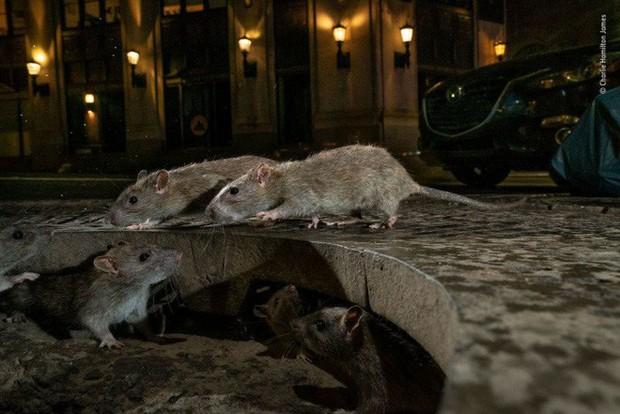 Bức ảnh sói dọa hú hồn chú sóc nhận Giải Nhất cuộc thi Nhiếp ảnh động vật hoang dã 2019 - Ảnh 13.