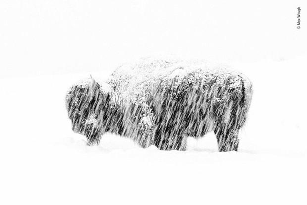 Bức ảnh sói dọa hú hồn chú sóc nhận Giải Nhất cuộc thi Nhiếp ảnh động vật hoang dã 2019 - Ảnh 15.