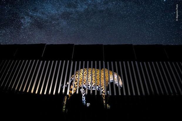 Bức ảnh sói dọa hú hồn chú sóc nhận Giải Nhất cuộc thi Nhiếp ảnh động vật hoang dã 2019 - Ảnh 16.