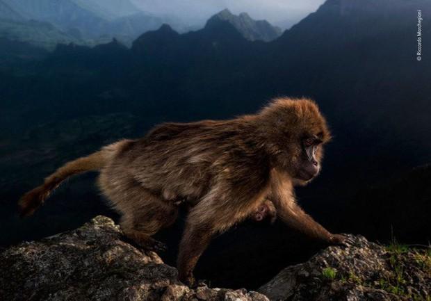 Bức ảnh sói dọa hú hồn chú sóc nhận Giải Nhất cuộc thi Nhiếp ảnh động vật hoang dã 2019 - Ảnh 4.