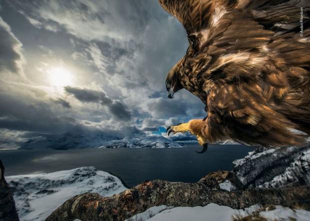 Bức ảnh sói dọa hú hồn chú sóc nhận Giải Nhất cuộc thi Nhiếp ảnh động vật hoang dã 2019 - Ảnh 8.
