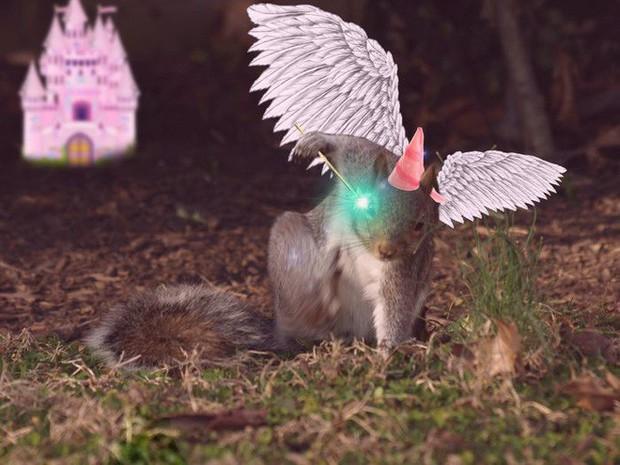 Nhìn các thánh photoshop chế hình chú sóc với dáng đứng bá đạo, ta mới thấy trí tưởng tượng của con người là vô biên - Ảnh 17.