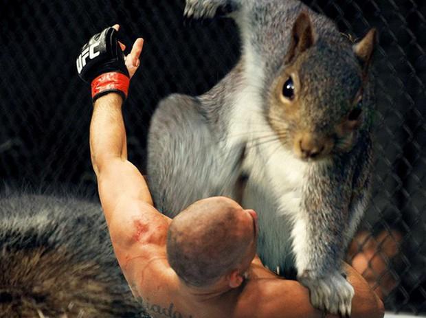 Nhìn các thánh photoshop chế hình chú sóc với dáng đứng bá đạo, ta mới thấy trí tưởng tượng của con người là vô biên - Ảnh 5.