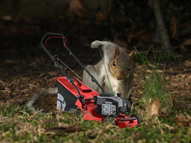 Nhìn các thánh photoshop chế hình chú sóc với dáng đứng bá đạo, ta mới thấy trí tưởng tượng của con người là vô biên - Ảnh 7.