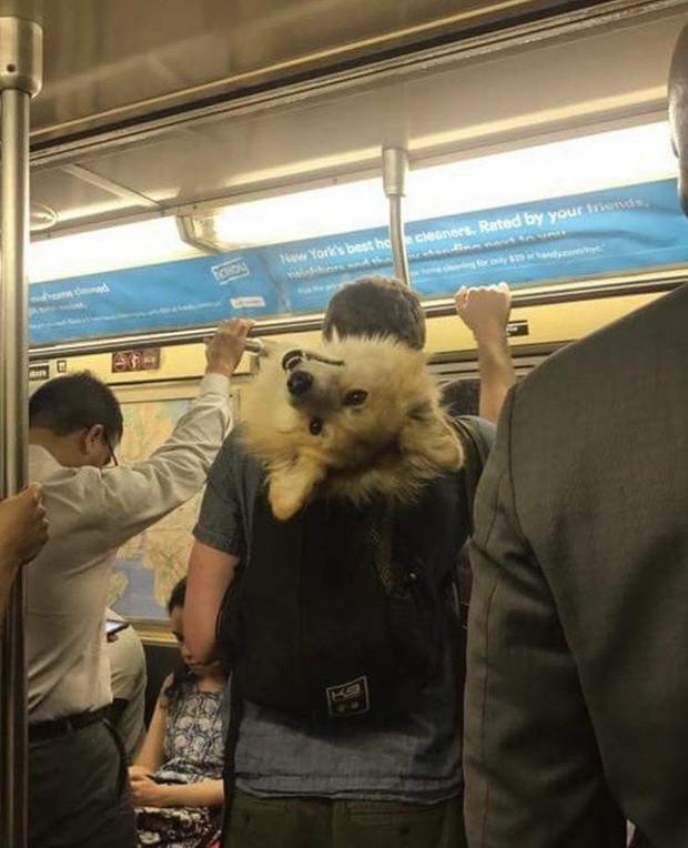 Loạt khoảnh khắc từ khó đỡ đến siêu hài hước mà bạn chỉ có thể nhìn thấy trên các phương tiện công cộng - Ảnh 22.