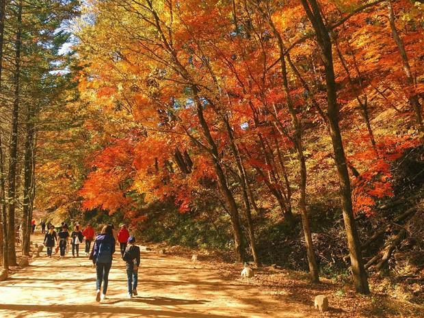 Đi Hàn Quốc mùa thu mà không ngắm lá đỏ thì uổng phí cả thanh xuân, lên lịch để hốt hình sống ảo liền nè! - Ảnh 9.