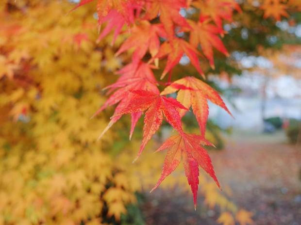 Đi Hàn Quốc mùa thu mà không ngắm lá đỏ thì uổng phí cả thanh xuân, lên lịch để hốt hình sống ảo liền nè! - Ảnh 4.