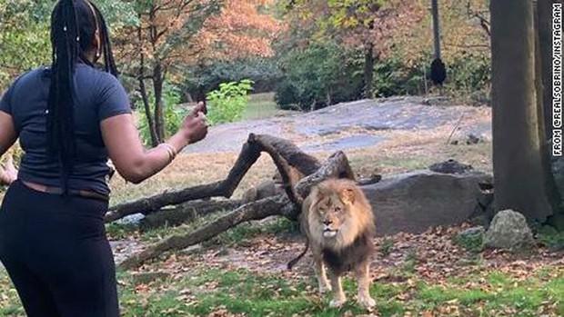 Xâm nhập vào chuồng để nhảy múa trêu chọc sư tử - Ảnh 1.