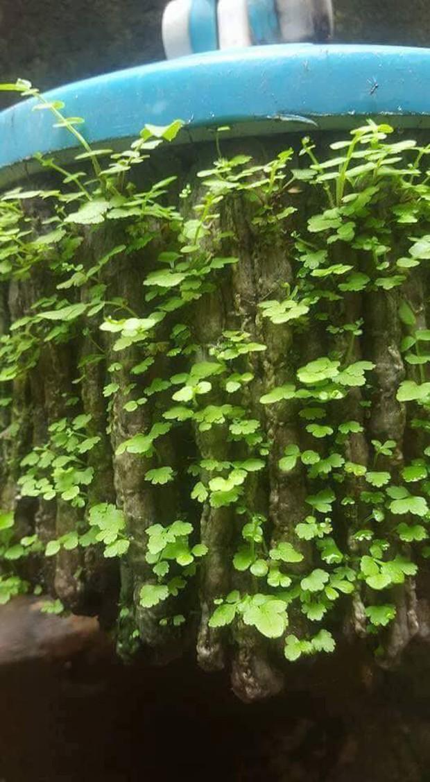 Thêm một ca ở bẩn khiến dân mạng câm nín: Cây lau nhà 3 năm không dùng mọc hẳn cả rừng cây xanh mướt - Ảnh 2.
